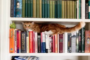 Cat squished in bookcase